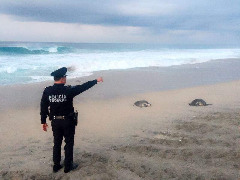 Refuerzanvigilancia y protección ante arribo de tortugas en La Escobilla, Oaxaca