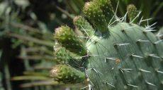Fortalecen la producción del nopal en la Mixteca