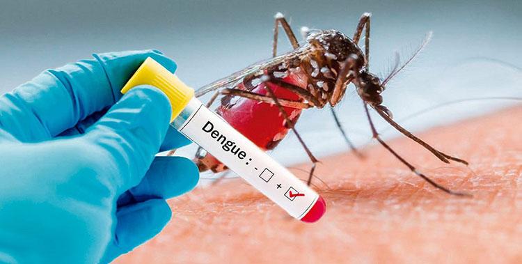 Aumentan a 89 las muertes por dengue en México