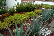 Azoteas verdes, opción para refrescar las grandes ciudades: expertos de la UNAM
