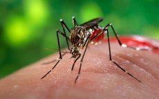 Aumenta a 4 el número de muertos por dengue