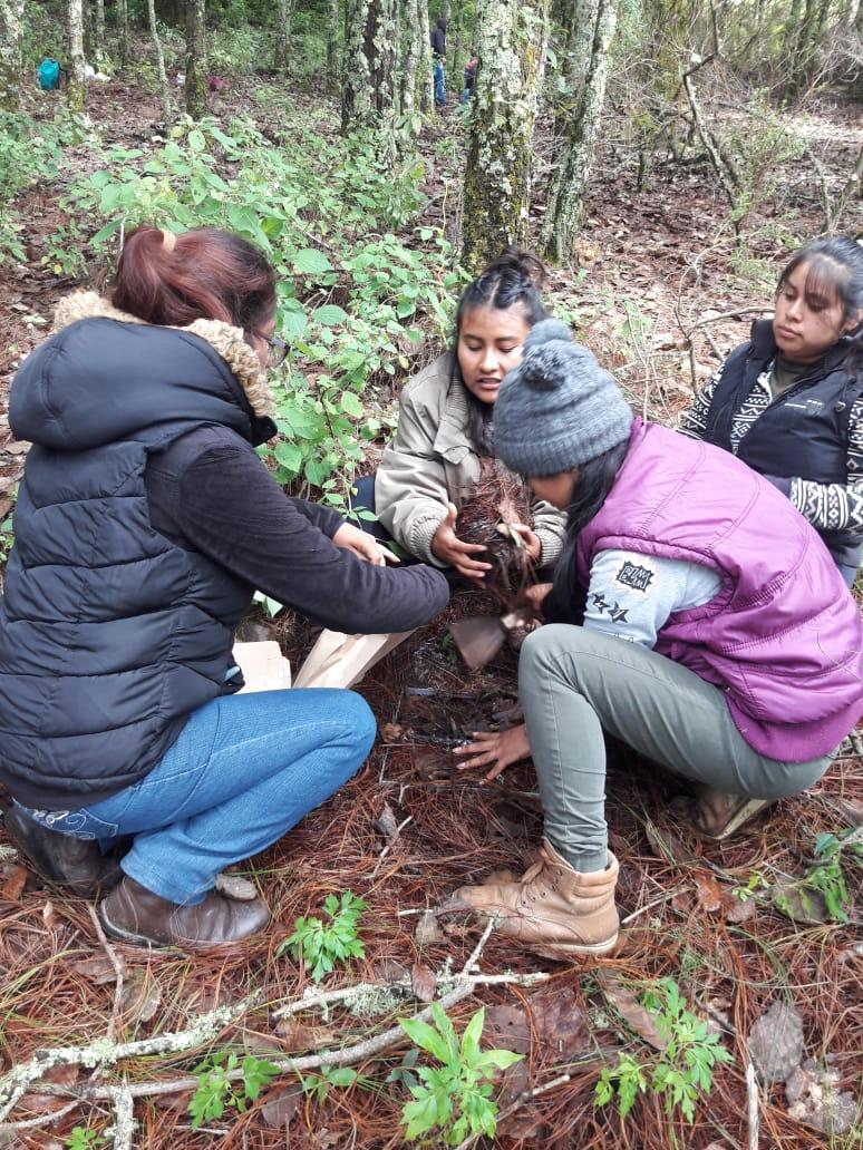 Estudian plagas que afectan a los bosques de la Mixteca