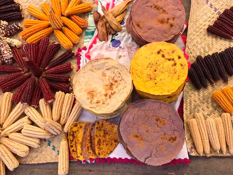 Oaxaca, cuna de la agricultura en Mesoamérica