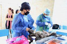 Esterilizó el municipio de Oaxaca 1,500 mascotas