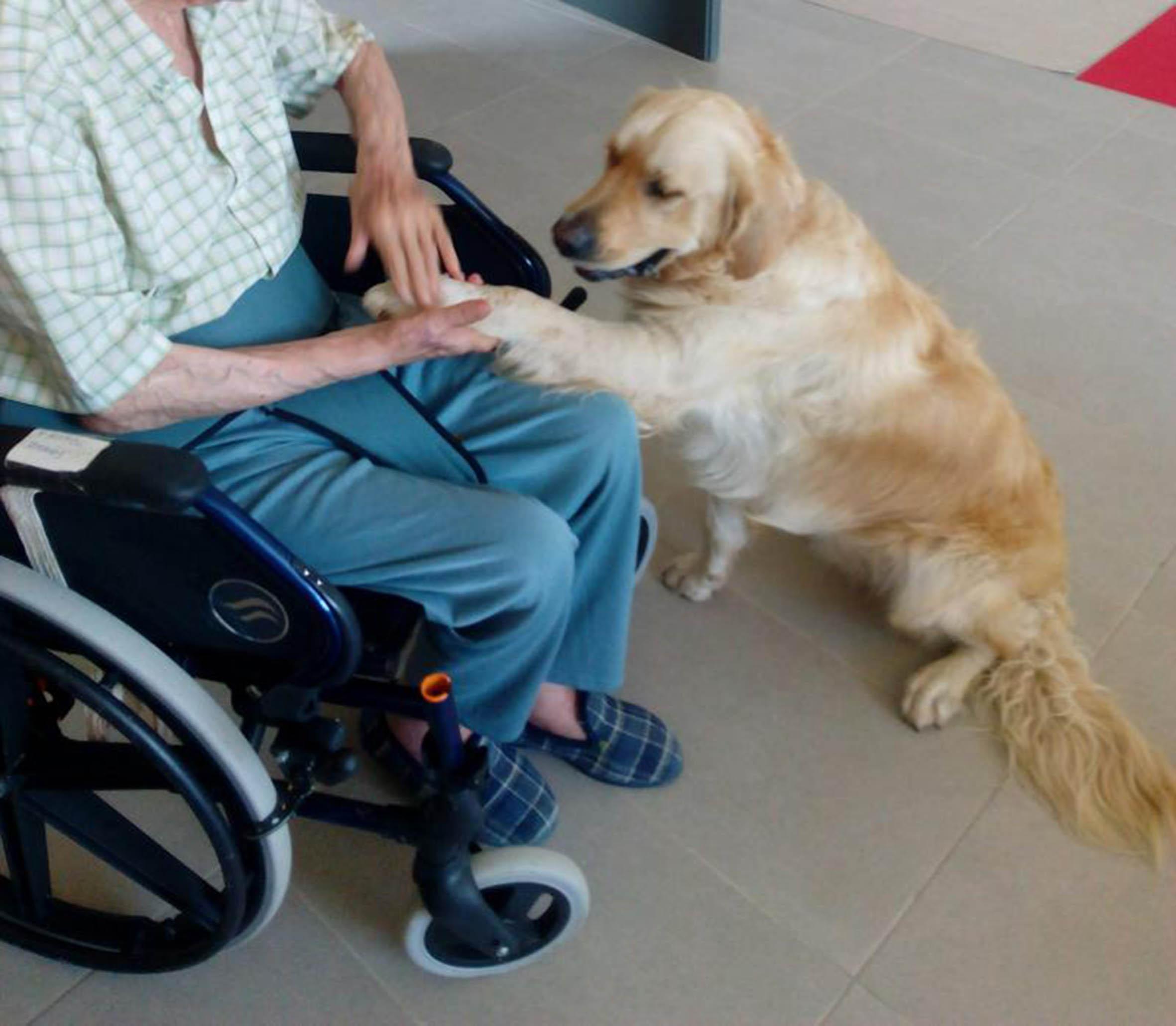 Mascotas, benéficas para la salud de adultos mayores