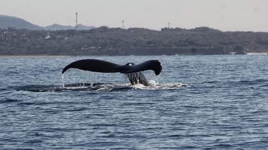 ¡Ballenas a la vista en Puerto Escondido!