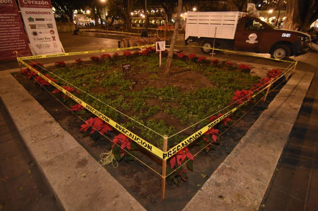 Embellecen con flores de Nochebuena el zócalo de la Verde Antequera