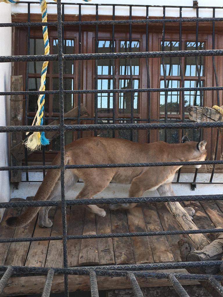 Aseguran animales exóticos y vehículos con reporte de robo en Tlalixtac