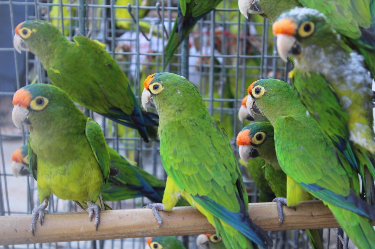 Comercio de vida silvestre, amenaza global: investigadora de la UNAM