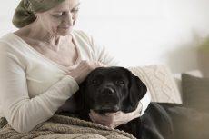 Mascotas, benéficas para adultos mayores