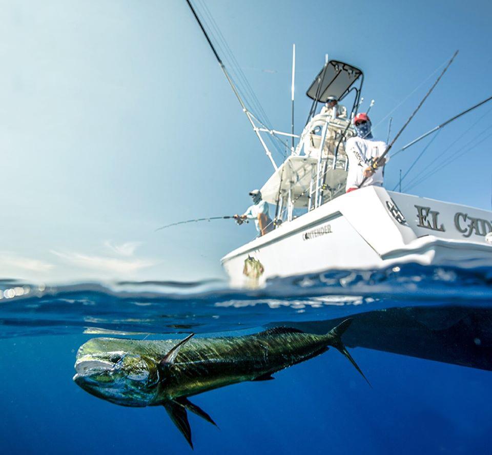 Todo listo para el 8º Torneo de Pesca del Pez Dorado