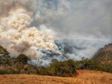 Mixteca, 1er. lugar en hectáreas dañadas por incendios forestales