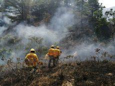 Unen esfuerzos para darle fin a incendios de la Mixteca