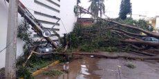 Lluvia con viento provoca caída de árbolesen municipios de Oaxaca: CEPCO