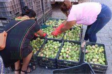 Promueven el consumo local en Oaxaca