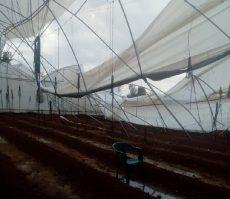 Activan protocolos por daños generados por lluvia y viento_01