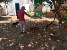 Descartan presunto caso de maltrato animal en Pueblo Nuevo