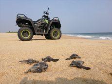 Donan cuatrimotos para proteger nidos de tortugas