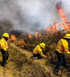 Dañan 206 incendios más de 19 mil hectáreas en Oaxaca