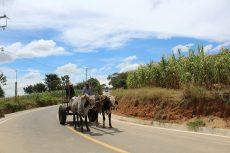 Refuerzan medidas para prevenir Covid-19 en agricultura