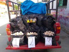 Aseguran 25 mil huevos de tortuga en el Istmo