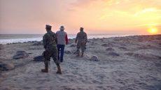 Más de 2 millones de tortugas desovaron en playas de Oaxaca en la temporada 2019-2020