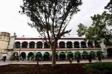 Higuera del Valle sustituye a laurel de la India en el Zócalo de Oaxaca