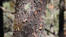 Piden atención para eliminar plagas en bosques de municipios mixtecos