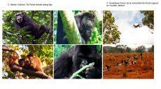 Investigan 15 instituciones cómo determinan los primates sus rutas de alimentación