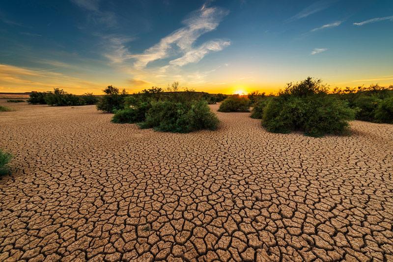 Solo 2.8 por ciento de los ecosistemas terrestres tienen integridad ecológica, estos se ubican en zonas extremas al norte y sur del planeta, donde casi no hay poblaciones humanas.