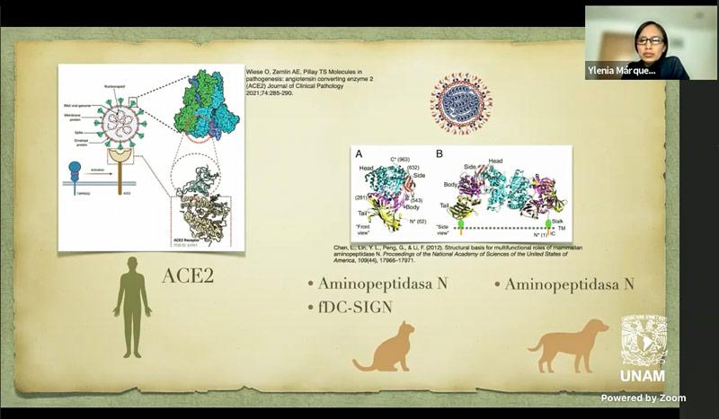 Sin evidencias de que mascotas contagien al humano de Sars-CoV-2